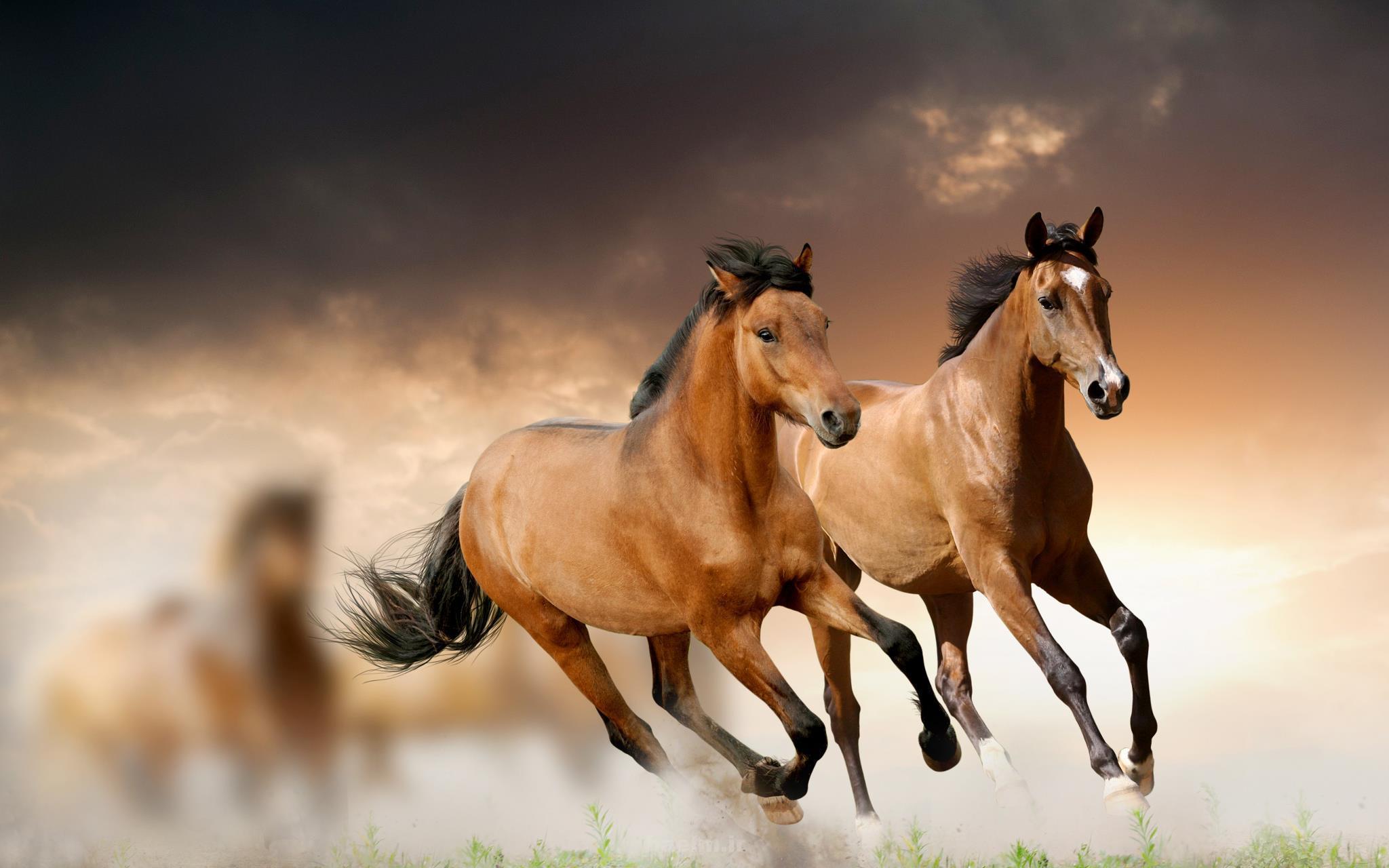 wild horses 3 Wild Horses