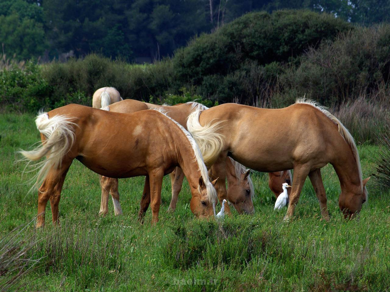 wild horses 4 Wild Horses