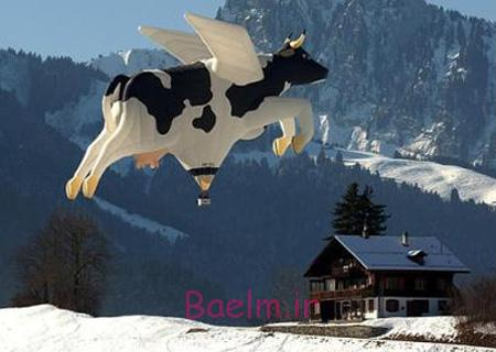 Cow Hot Air Balloon