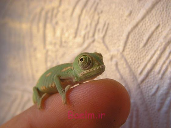 Cute Photos of Tiny Animals on Fingers