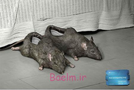 Rat Slippers