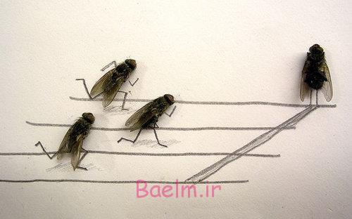 تصاویر جالب | عکس های بسیار خنده دار از مگس ها در زمان زنگ تفریح