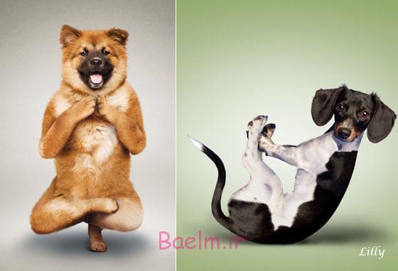 عکس های خنده دار | حرکات آکروباتیک و بامزه از گربه ها و سگ ها