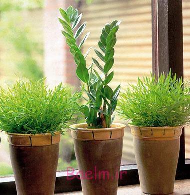 گل و گیاه | آشنایی کامل با نحوه نگهداری گیاه زامیفولیا