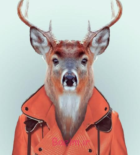 Animal Fashion Portraits