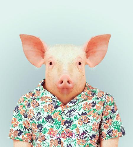 Animals Wear Clothing