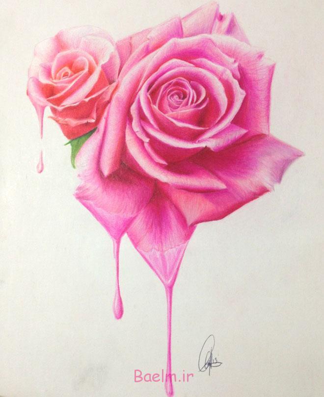 flower drawings rose