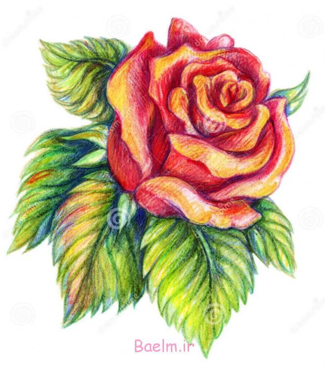 عالی و بی نظیر | نقاشی انواع گل با مداد (بسیار زیبا)