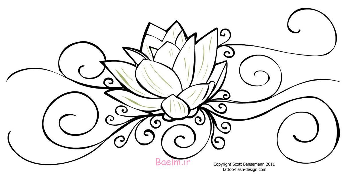 flower drawing lotus