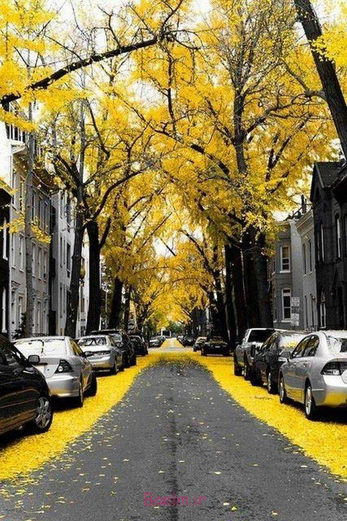 Mesmerizing Streets Shaded With Flowers And Trees