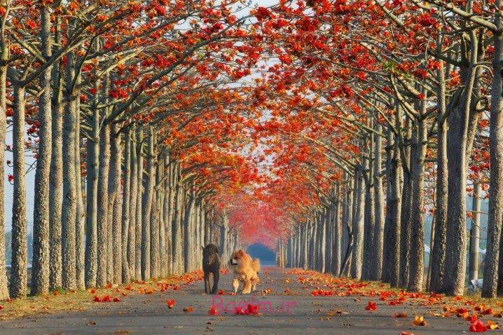 عکسهای زیبا   رمانتیک ترین و مسحورکننده ترین خیابانهای دنیا