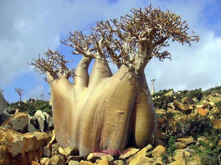 عکسهای بی نظیر   باور نکردنی ترین درختان دنیا (بسیار زیبا)