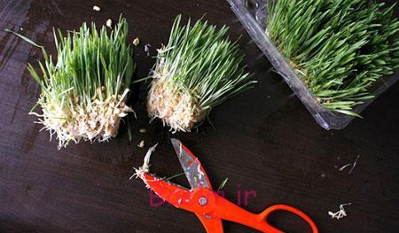 تزیین سبزه هفت سین, درست کردن سبزه برای کودکان