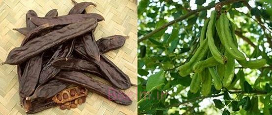 گیاهان دارویی | خواص دارویی و درمانی گیاه خرنوب