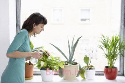 آبیاری گلهای آپارتمانی,آبیاری گیاهان آپارتمانی, روشهای آب دادن به گلها