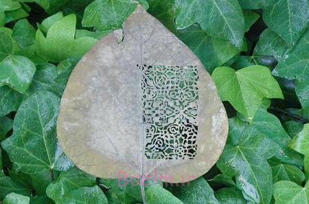 ،آثار هنری روی برگ عکس های زیبا از هنرنماییی روی برگ درخت