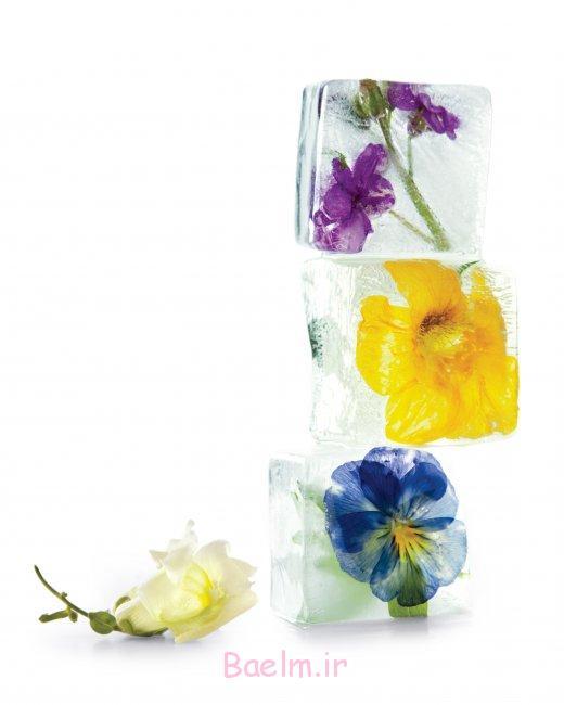 icecubes-گل-0511mld107066_vert