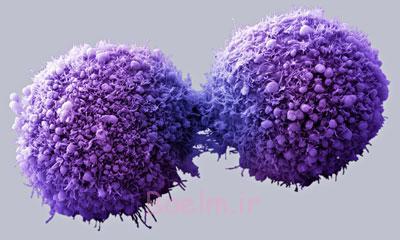 سرطان روده بزرگ, عفونت رحم