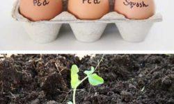 چند ایده جالب باغبانی برای پرورش گل در منزل