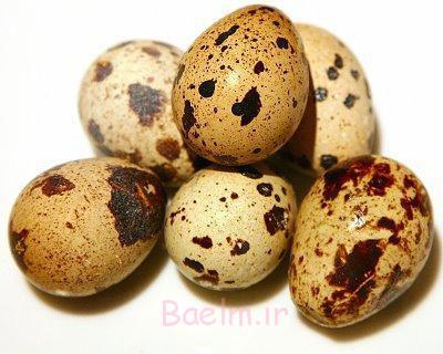 خواص تخم مرغابی,خواص تخم غاز