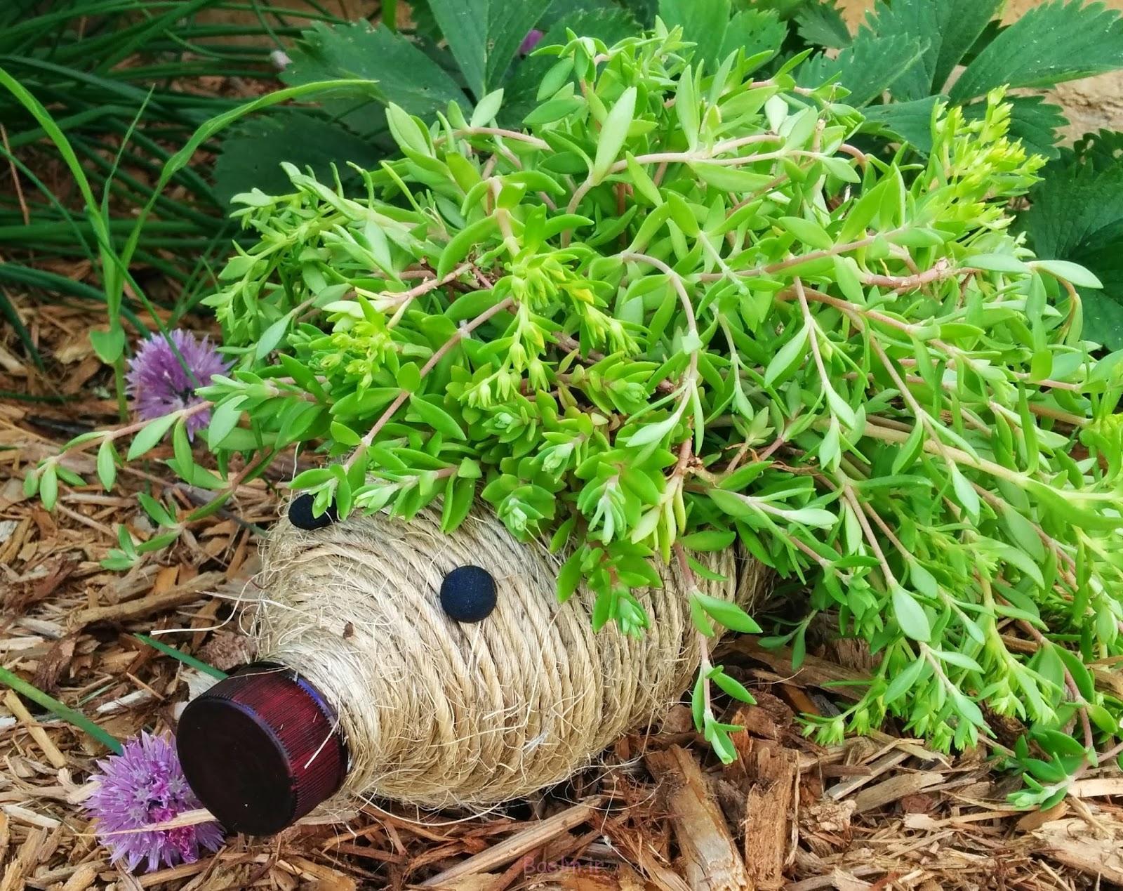زمینی جوجه تیغی DIY برای باغ خود را