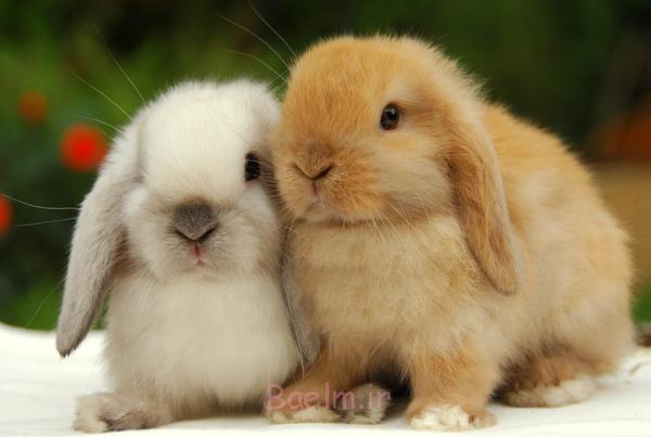 """راهنمای کامل نگهداری از """"خرگوش"""" در خانه و آپارتمان ( مهم )"""