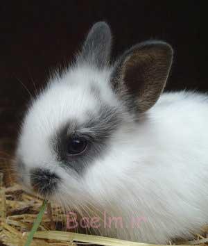تغذیه خرگوش, درباره خرگوش ها