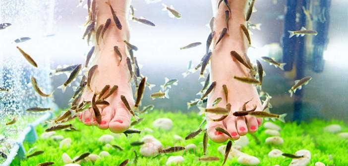 fish-pedicure-702x336