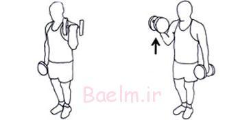 دمبل, تقویت عضلات سینه, تقویت عضلات جلو بازو