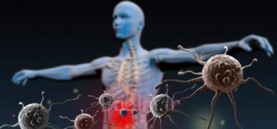 مواد غذایی برای تقویت سیستم ایمنی بدن, افزایش گلبولهای سفید