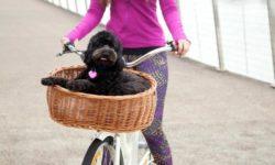 عکسهای جالب از سبد مخصوص نگهداری سگ هنگام دوچرخه سواری