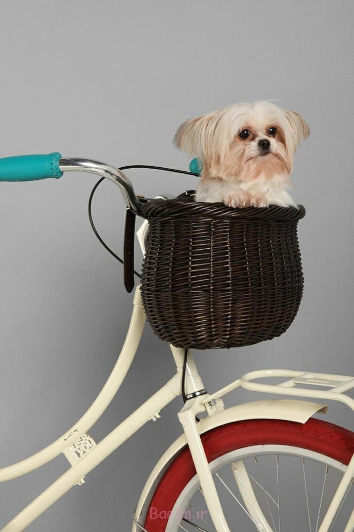 hundekorb design aussuchen stilvoll kleine hunde