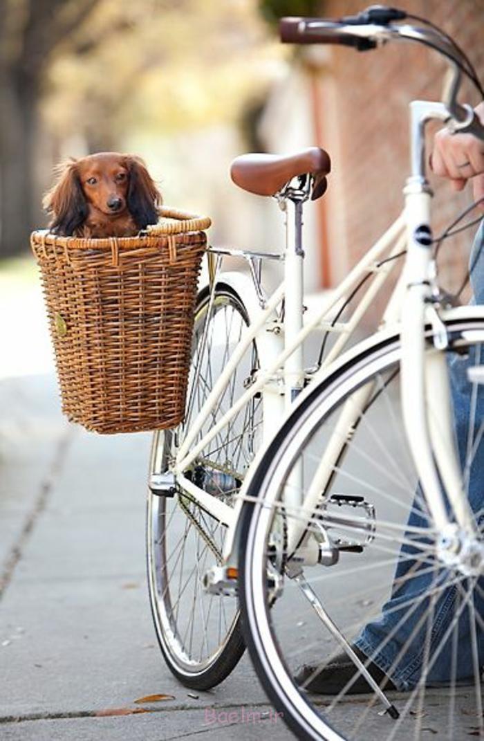 hundekorb design fahrrad korb seitlich montieren