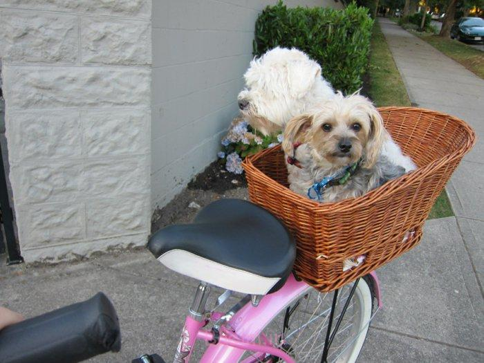 hundekorb fahrrad design mehrere hunde haustiere