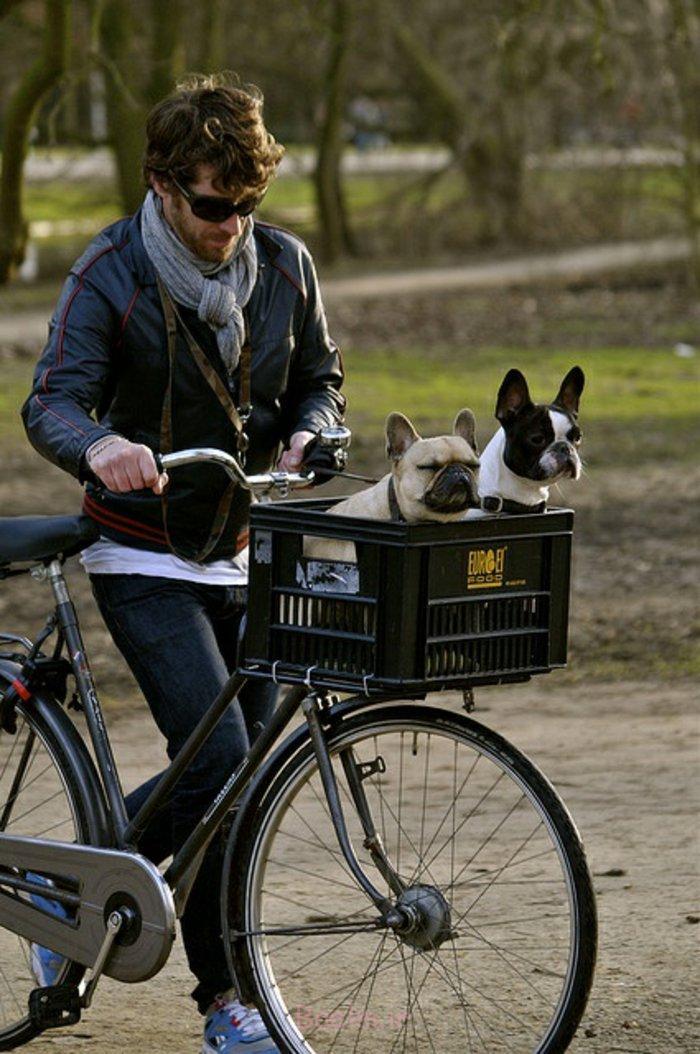 hundekorb fahrrad diy ideen zwei hunde