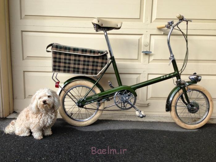 hundekorb fahrrad rad fahren haustiere hunde