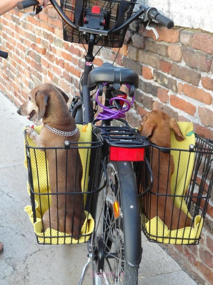 hundekorb zwei hunde haustiere lifestyle