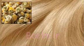 بابونه برای موهای طلایی