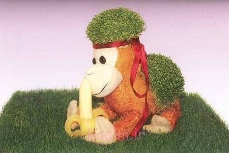 سبزه به شکل میمون,کاشت سبزه سال 95