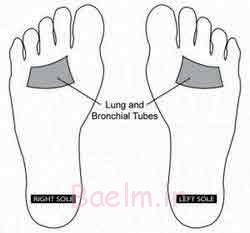 ماساژ کف پا برای کاهش حساسیت فصلی : ریه ها؛ به مدت 60 ثانیه ماساژ دهید
