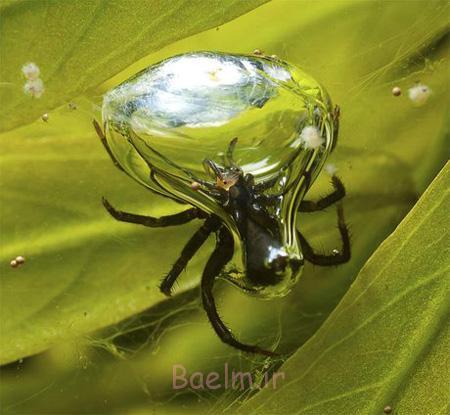 گونه های عجیب عنکبوت, کشف عنکبوت های جدید