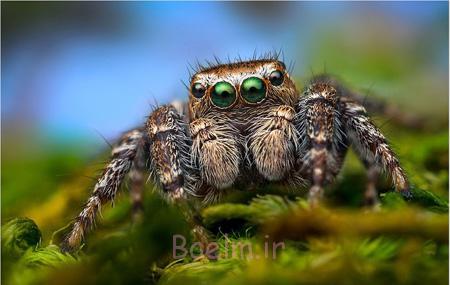 کشف عنکبوت های جدید,آشنایی با انواع عنکبوت