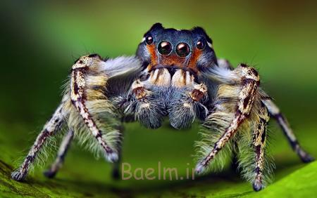شناخت عنکبوت های عجیب,آشنایی با انواع عنکبوت