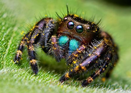 آشنایی با گونه های عجیب عنکبوت, گونه های عجیب عنکبوت
