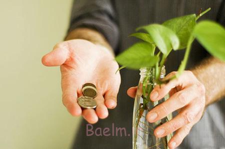 آماده کردن گیاه مناسب دفتر کار,آشنایی با گیاهان دفتر کار