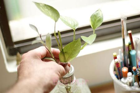 آشنایی با نگهداری از گیاهان دفتر کار,آماده کردن گیاه مناسب دفتر کار