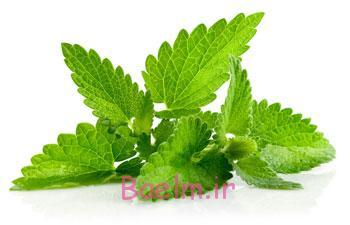 گیاهان دارویی درمان گیاهی جوش صورت