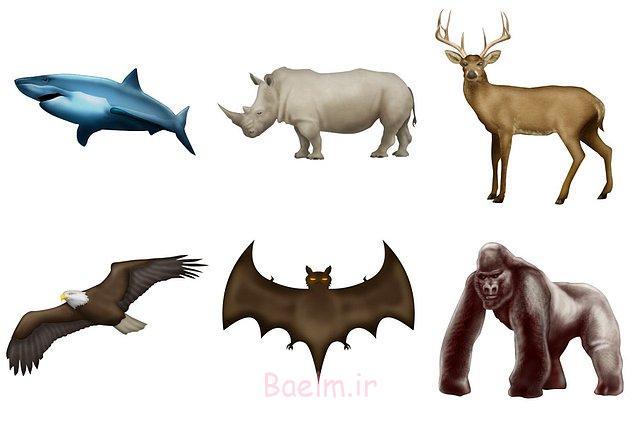 Çeşit çeşit yeni hayvan diğerleri arasında yerini aldı.