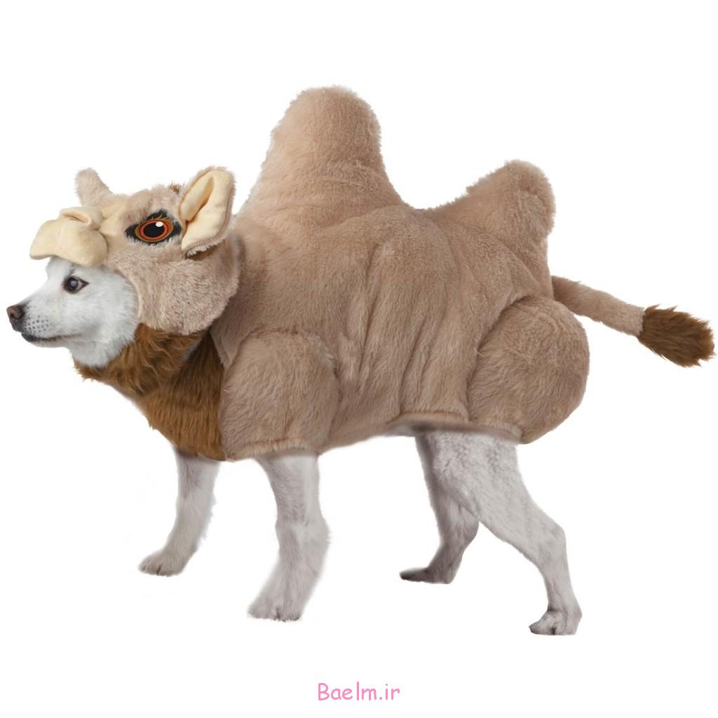 camel-dog-costume-1024x1024