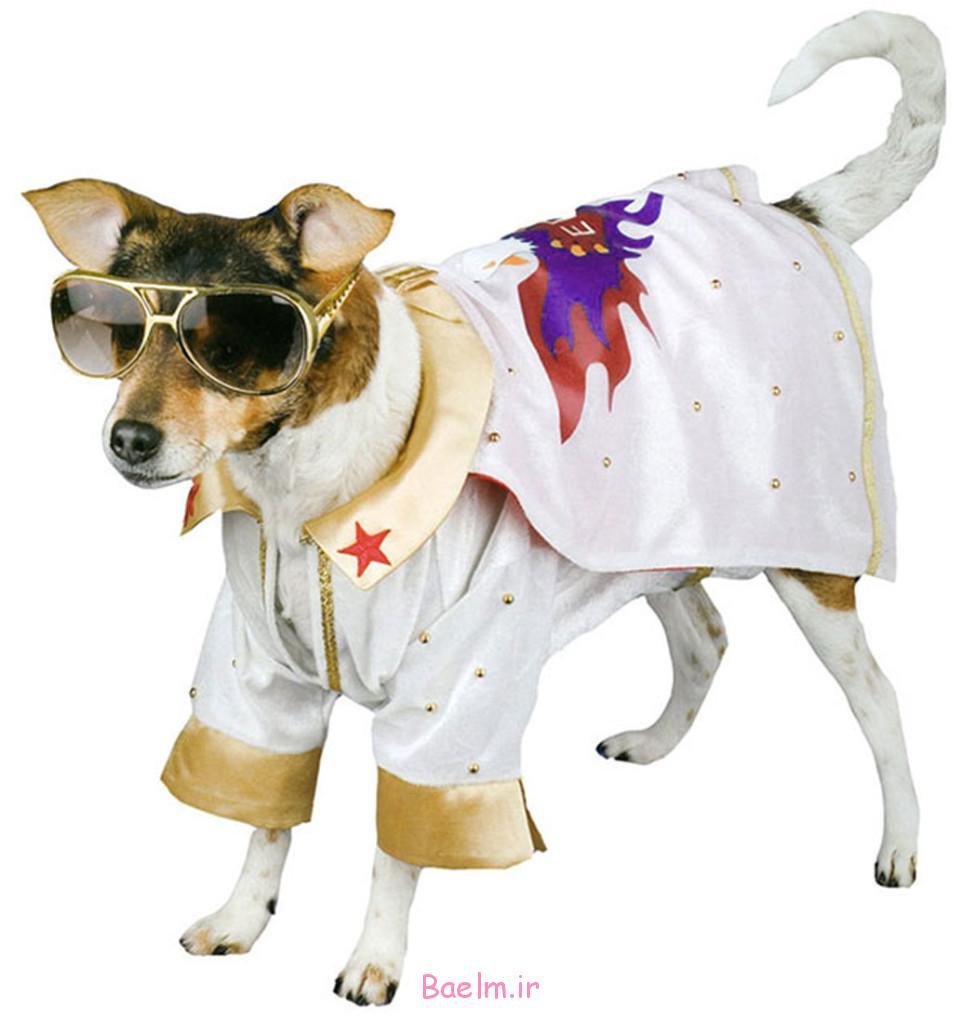elvis-dog-costume-962x1024